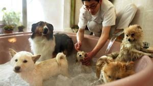 <p>Puppies enjoy a jacuzzi bath of tea tree oil and Japanese cypress after exercising on a doggie treadmill at Ken21, a pet store, pet health food vendor and pet hotel in Tokyo February 8, 2003. As Japan undergoes a pet boom and obesity among pampered d