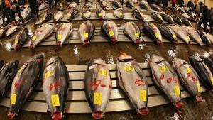 Inception Date: <strong>May 3, 2011</strong><br/>Net assets: <strong>$1.8 million</strong><br/>Global X suggests that the fish trade is likely to increase in coming years as diets around the world continue to add more protein. This young fund tracks an in