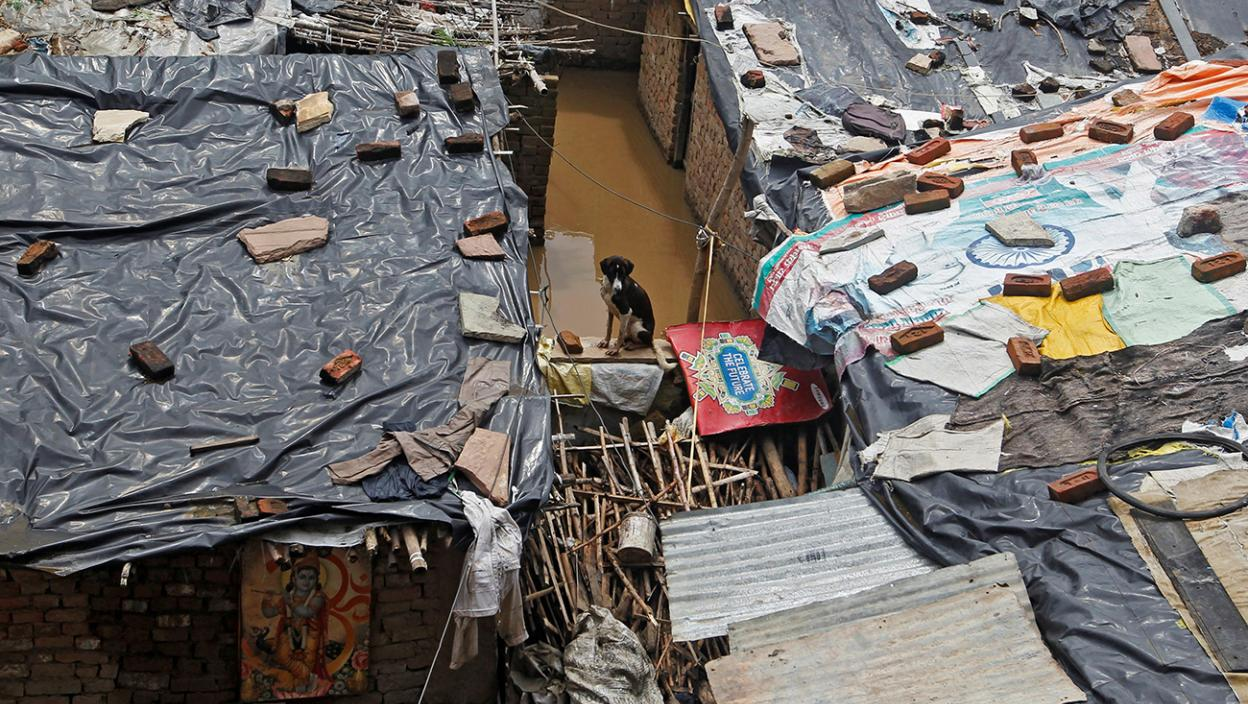 A dog sits on a wall of a house at a slum area on the flooded banks of the river Yamuna in Allahabad