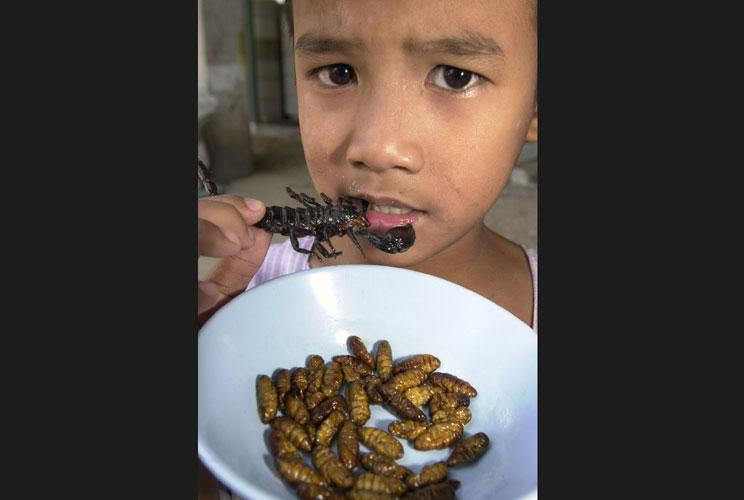 "Jarung Zatung, nine, takes a bite of a deep-fried scorpion at a Bangkok ""bug"" restaurant February 5 over a bowl of deep-fried silkworms, some of many species on the menu that are considered a delicacy. As more Thais learn of some insects' nutritional valu"