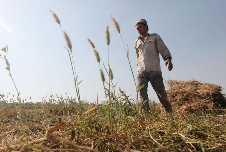 Wael Abo El Saoud, a 25 year-old farmer, harvests wheat on Miet Radie farm El-Kalubia governorate, about 60 km (37 miles) northeast of Cairo May 8, 2012. Wael studied for four years at Benha University where he received a degree in commerce. He hoped to f