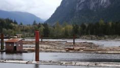 Logs are pushed into the water at Squamish Mills Ltd in Howe Sound near Squamish/